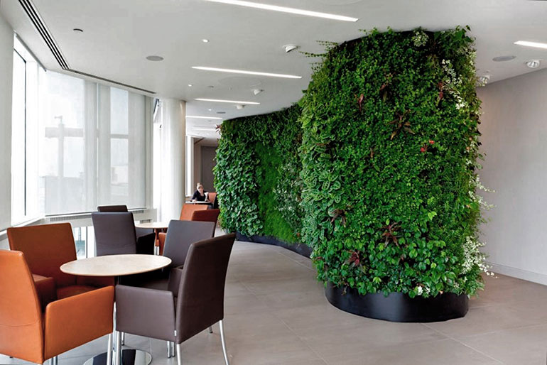Living Wall in an Office